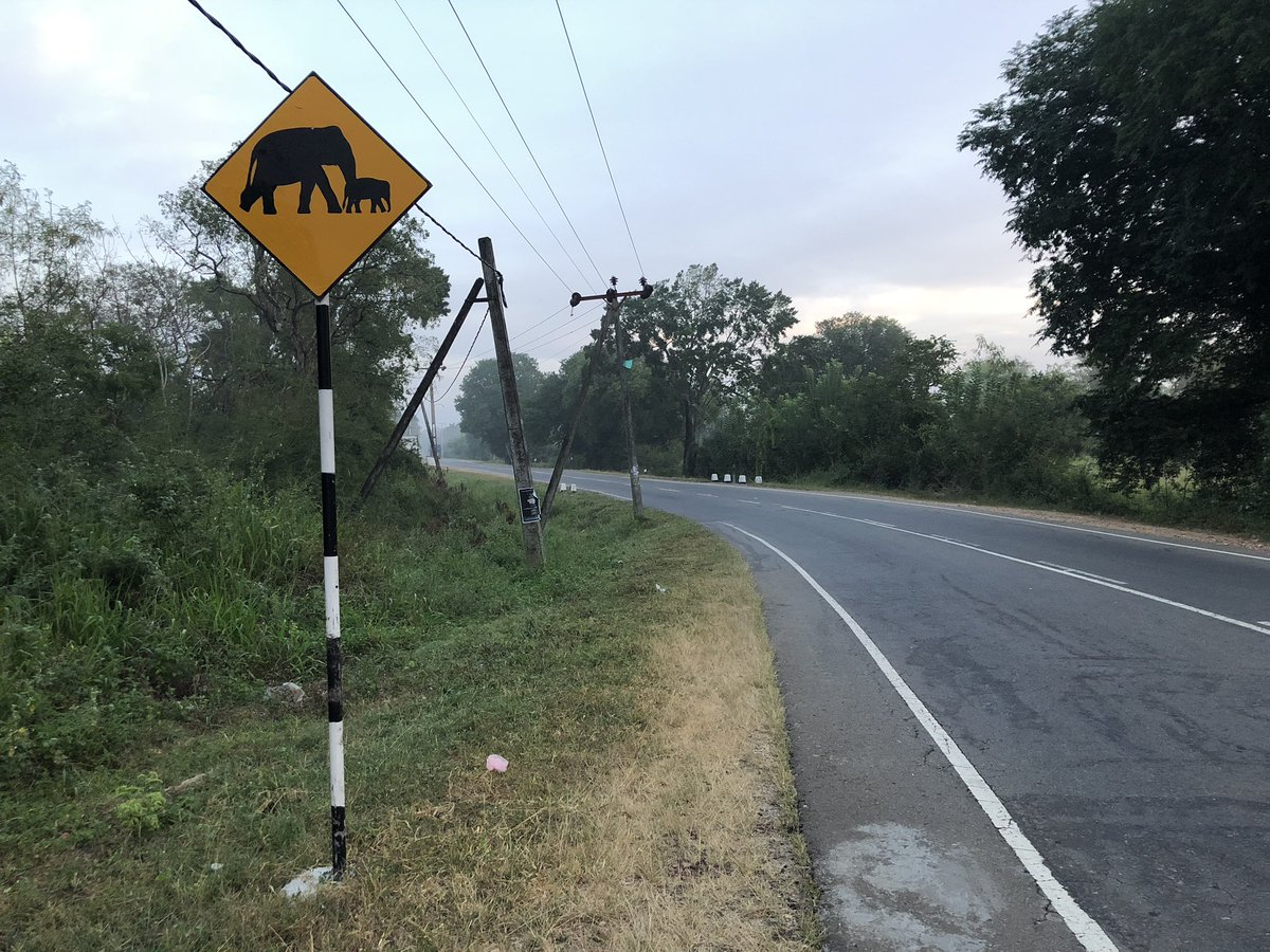 Normally these signs warn you to watch out for potential roadkill. In this case, I'm guessing the roadkill would be you. Southern Sri Lanka 🇱🇰