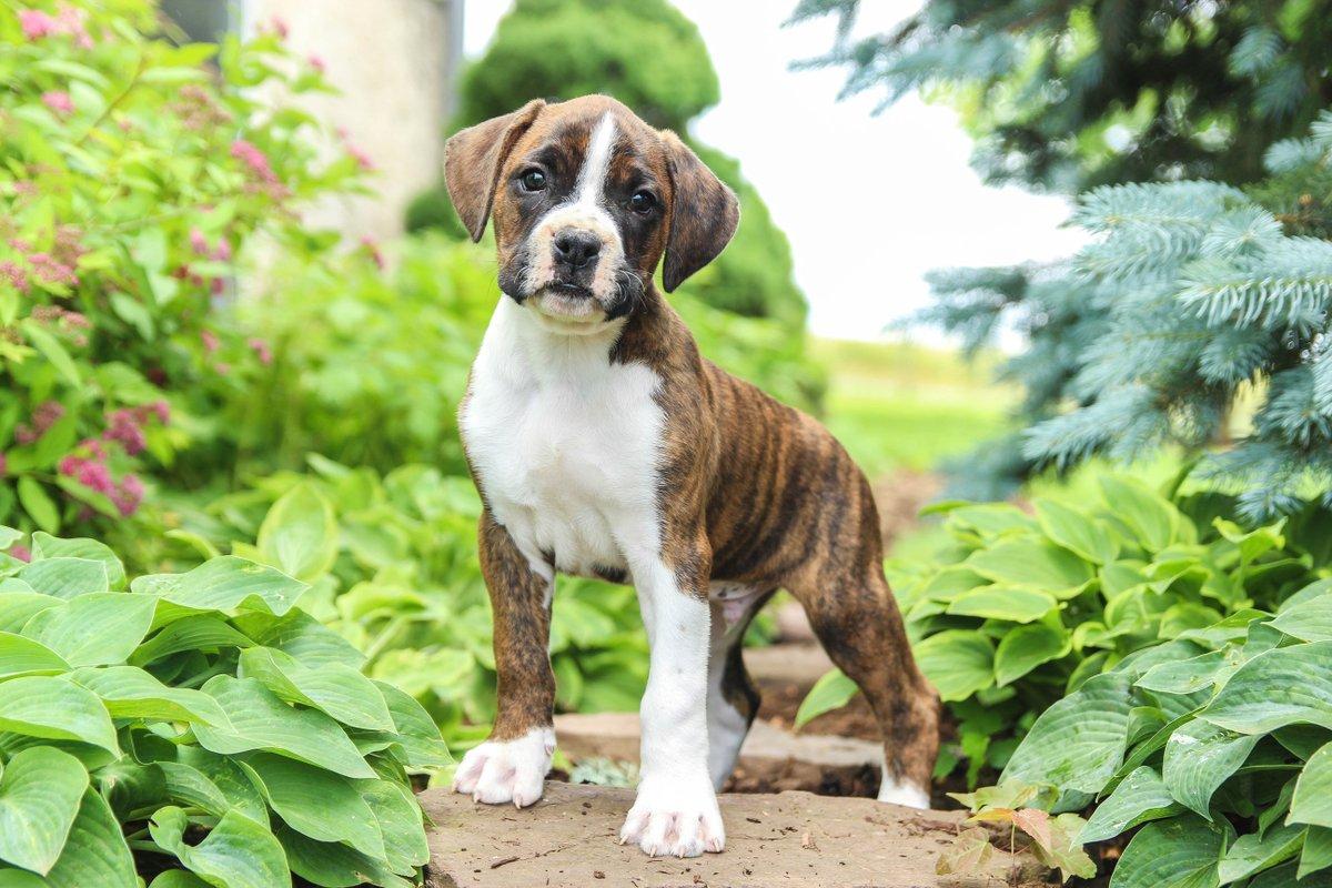 Buckeye Puppies's photo on #FridayFun