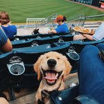 Image for the Tweet beginning: We're dreaming of summer, #DurhamBulls