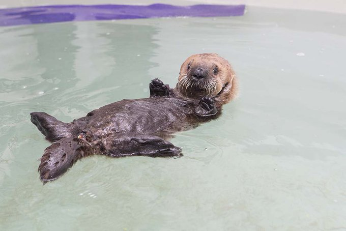 It's not quite #2009vs2019, but take a look at how much rescued sea otter Luna has grown since 2014! Photo