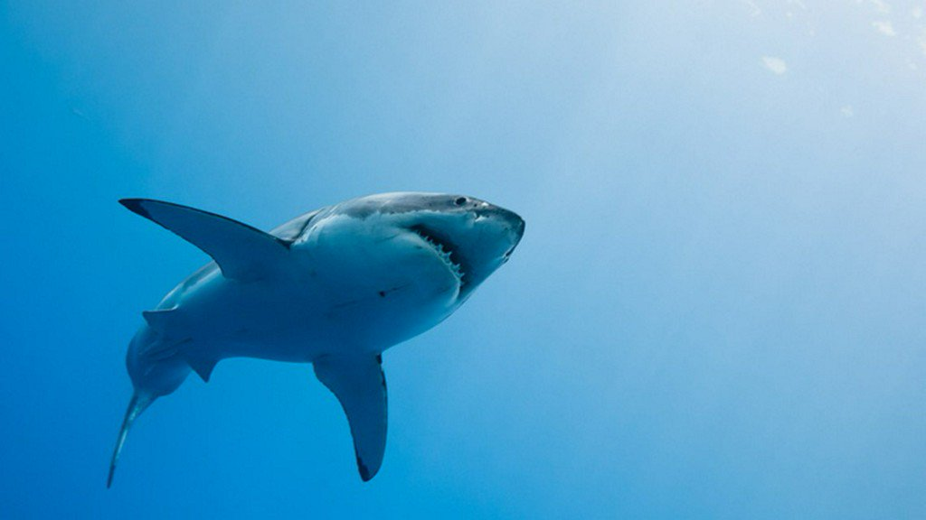 Researchers swim with what could be largest great white shark ever recorded https://t.co/ZiiIGvGGGs