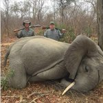 Image for the Tweet beginning: He killed a BABY elephant!