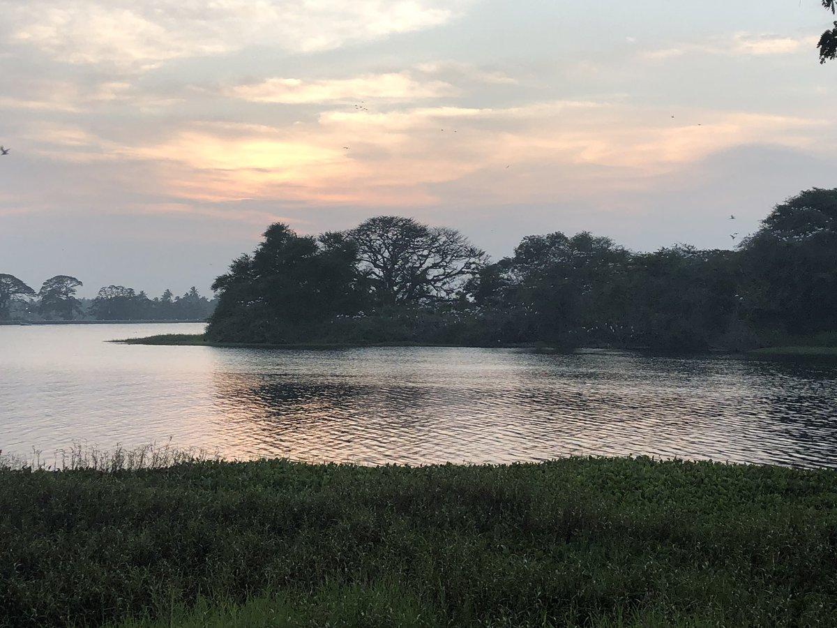 Birds gathered on an island at dusk, on Lake Tissa, in southern Sri Lanka 🇱🇰