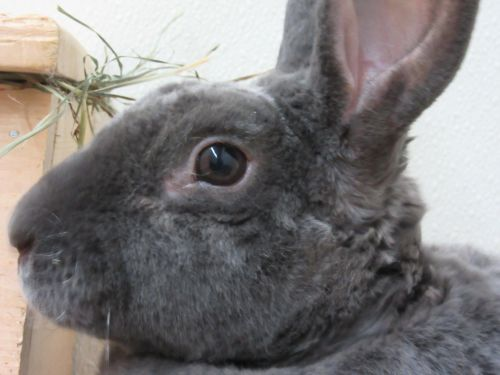 Adoptable Buns Ъљ░ЪљЄ's photo on Newport
