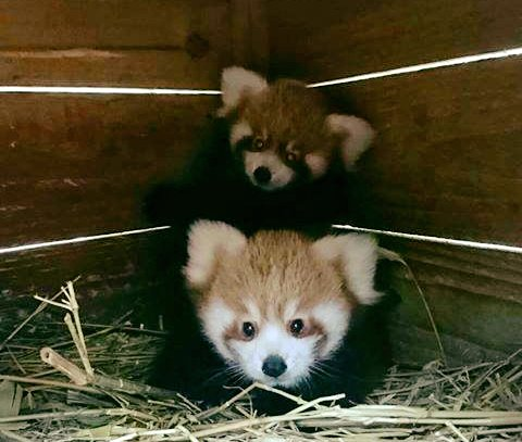 Red Panda Network's photo on #FeelGoodFriday