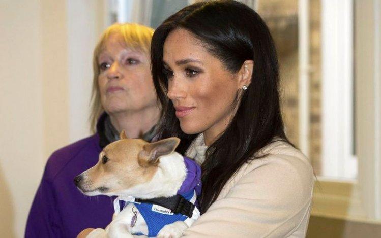 El 'efecto Meghan' toca también a una perrita sin hogar https://t.co/gsSvfIlLq2 #MeghanMarkle #Royals