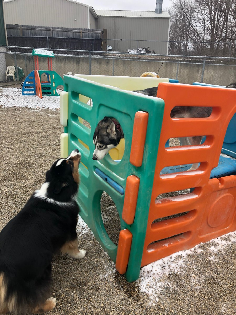 "Lyka plays ""peek a boo"" with Triumph."