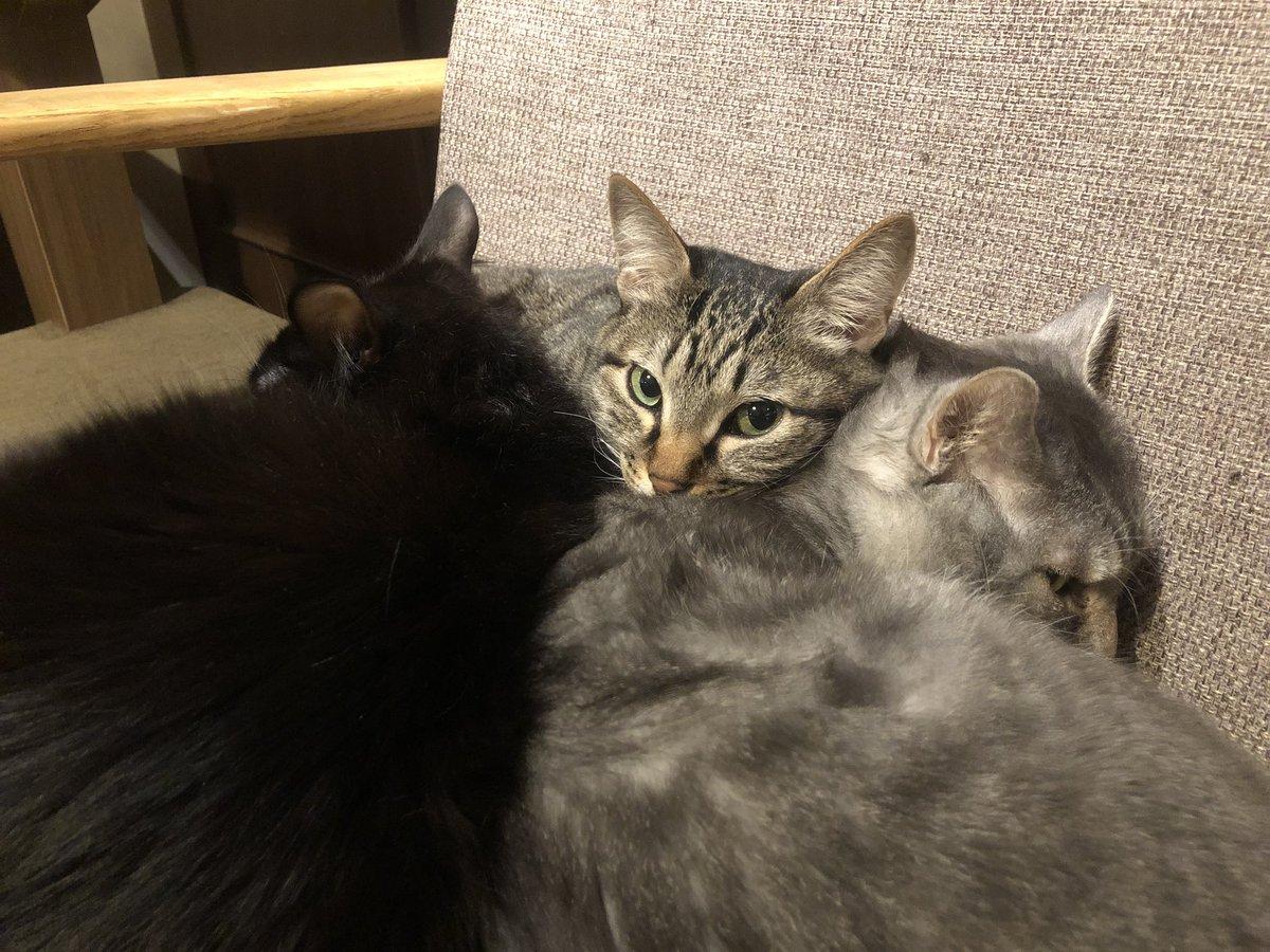 カフェきゃらふ 東京浅草の猫カフェ's photo on anouk
