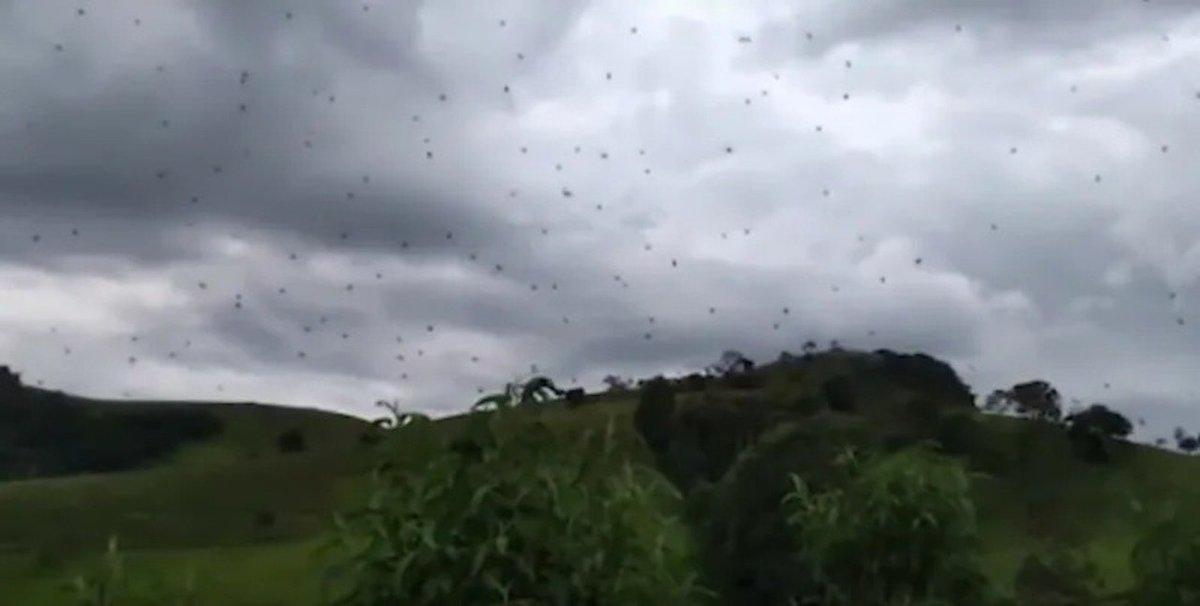 恐怖! 空一面が「蜘蛛」という地獄がブラジルにて発生 https://t.co/MEMmtZSGSJ