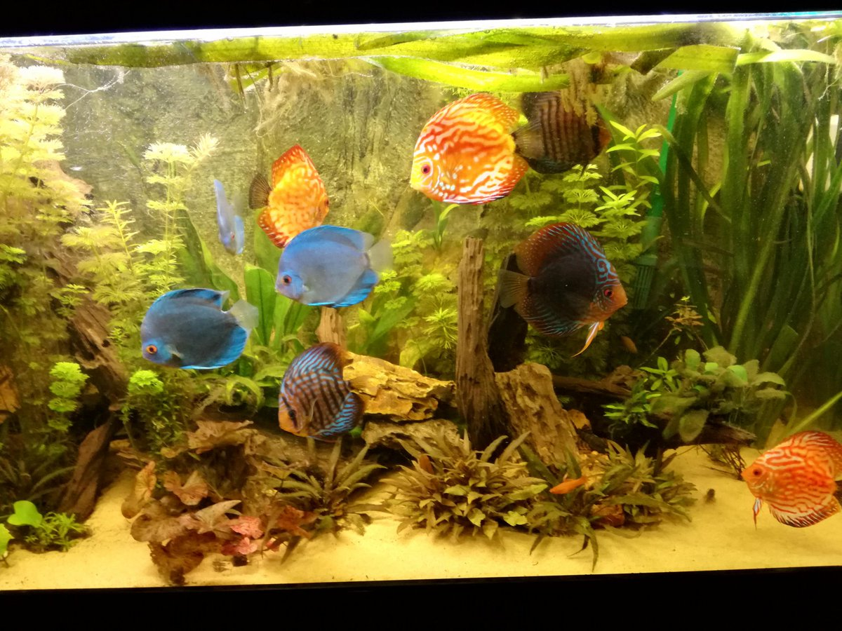 Aquarium Land's photo on My Friday
