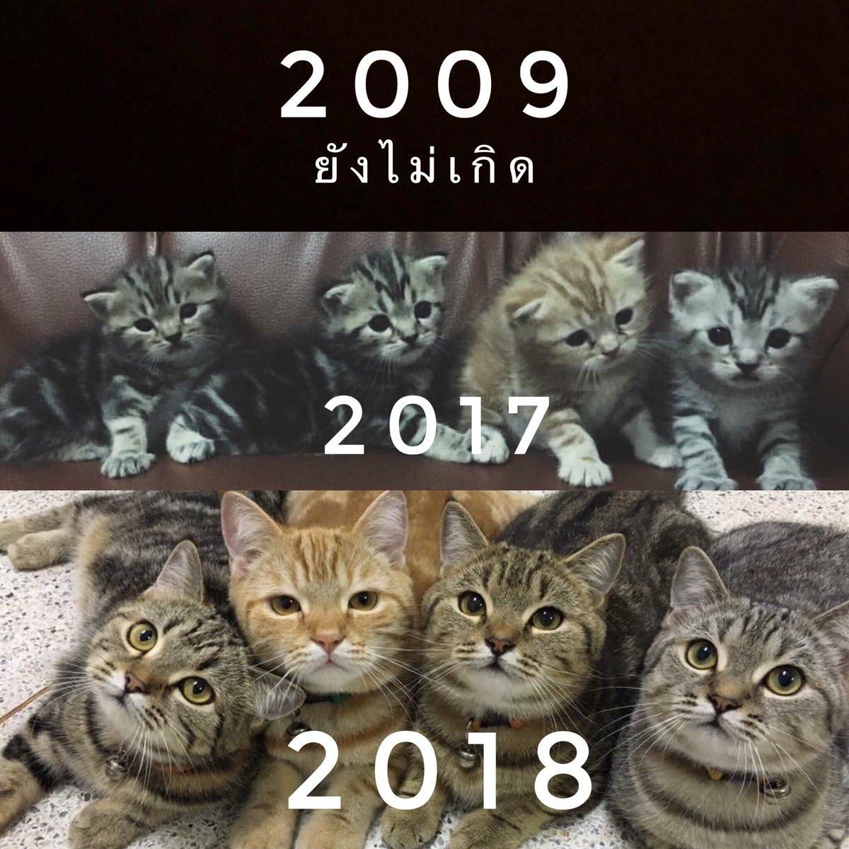 RT @egg_family4: 2019 ถ่ายไม่ได้ กล้องเต็ม😂 https://t.co/LyYxaijZwa