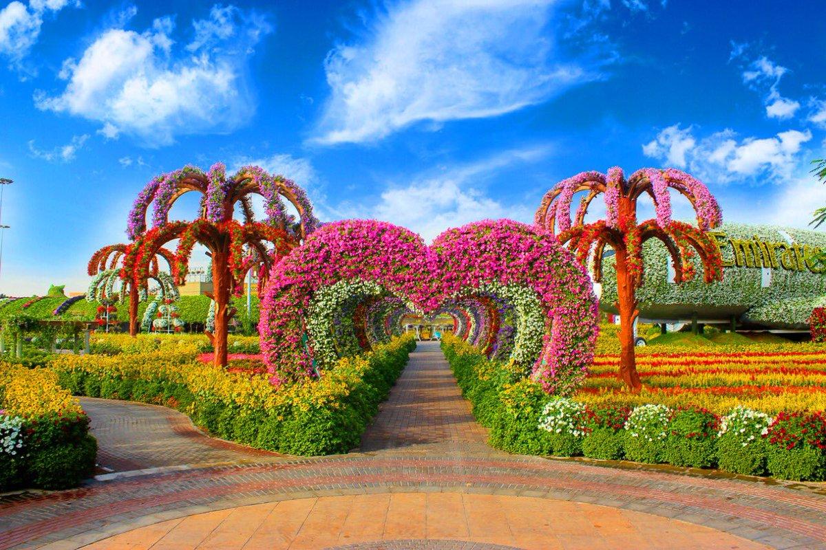 Conoce 'Dubai Miracle Garden', el jardín de flores naturales más grande del mundo