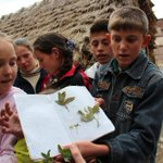 Children from the Gorani village of Borje #Albania eagerly shared results of their school project on local plants w/ us.  Children are innately drawn to #plants & #nature if given the chance & encouragement. Take some time w/ children in your life to #explore nature. #planthunter