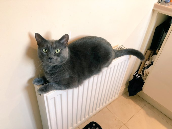 If I could perch on the radiator I would too. Have a cozy #Caturday! Photo
