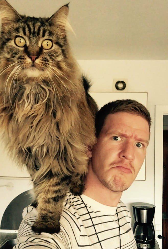 многие нужно завести себе кота картинка ботфорт