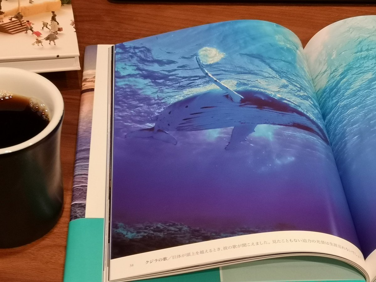 星と海の楽園に関する画像8
