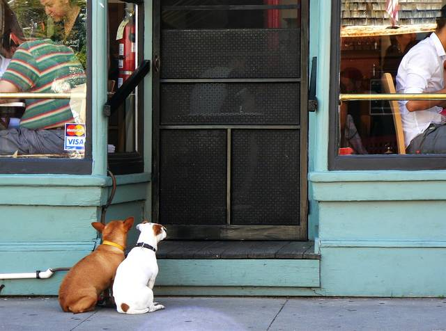 #Letter: Restaurant dog ban being considerate https://t.co/HeJGZW5Zmt #hawaii #opinion