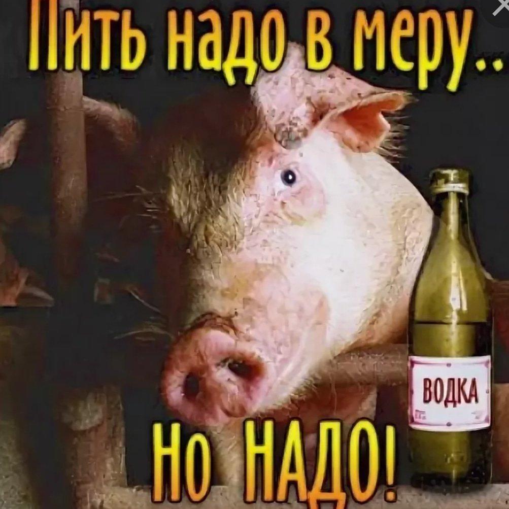 Картинки не пей много водки