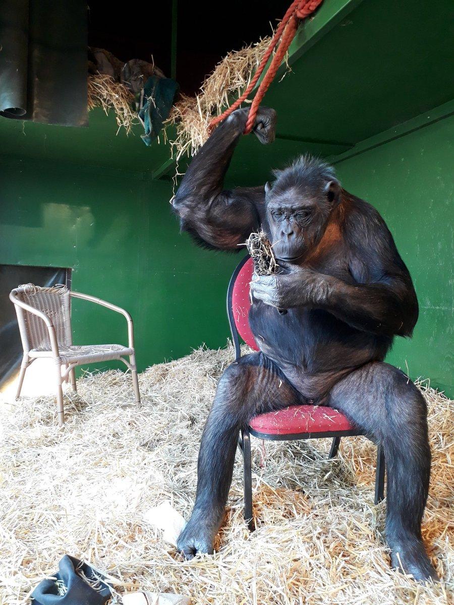 Habe mich eben mit einer Bürste  beschäftigt. Das macht Spass! #TiereGehörenZumZirkus  #Tierbeschäftigung  #Haarbürste