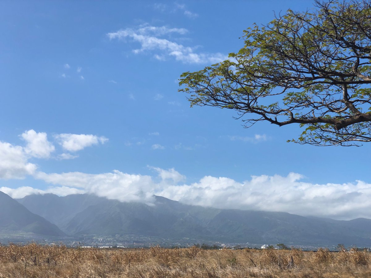 test Twitter Media - Warm, windy and wonderful on a beautiful Sunday looking towards the west Maui Mountains from central Maui. #cmweather #majesty #Maui #Sunday https://t.co/n8s3nITdAY