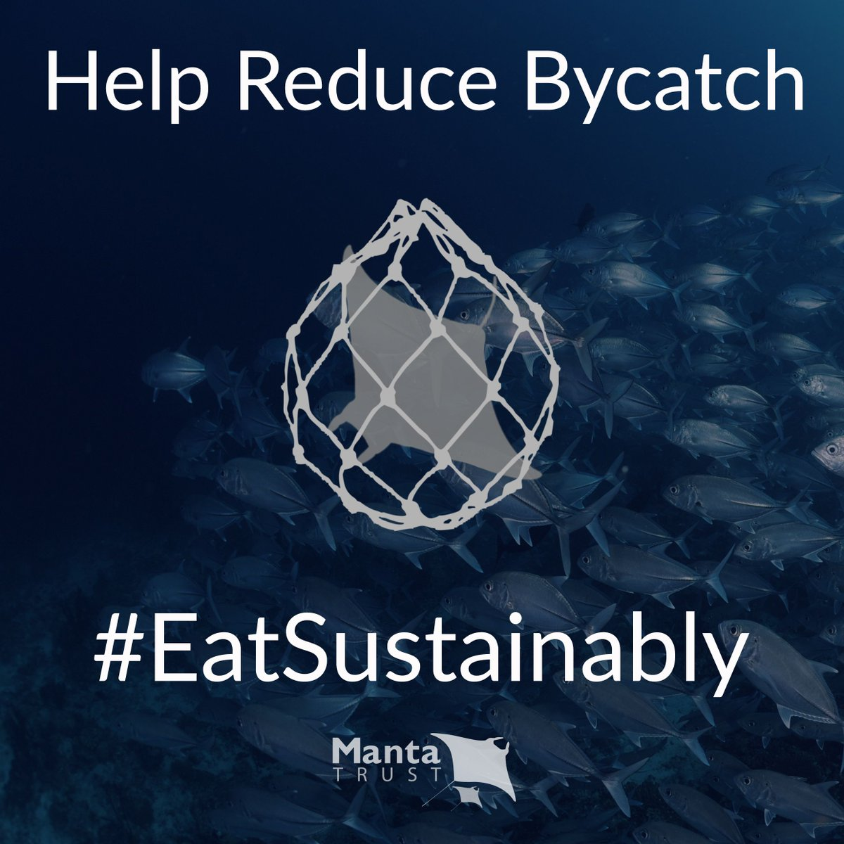 BYCATCH . . . it&#39;s one of the biggest threats to #mantarays and #devilrays - thousands are killed incidentally in high seas fisheries each year.    But YOU CAN HELP check out our top 5 tips to   http:// bit.ly/2WxegTw  &nbsp;     #reducebycatch #eatsustainably @mcsuk @saveourseas<br>http://pic.twitter.com/HEWFXFbp3N