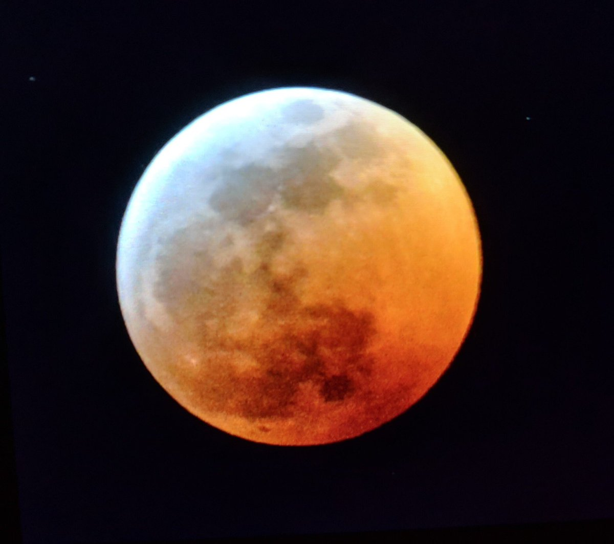 wolf blood moon january 2019 florida - photo #40