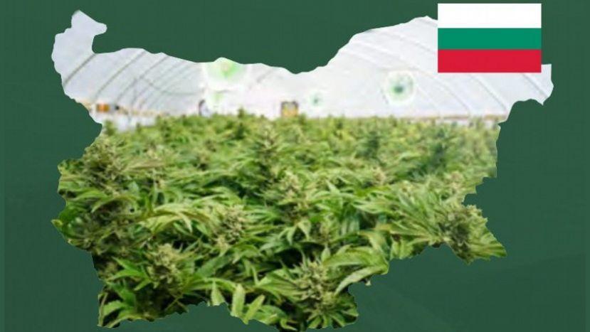 Болгария отношение марихуане конопля злоупотребления