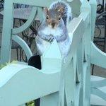 #SquirrelAppreciationDay Twitter Photo