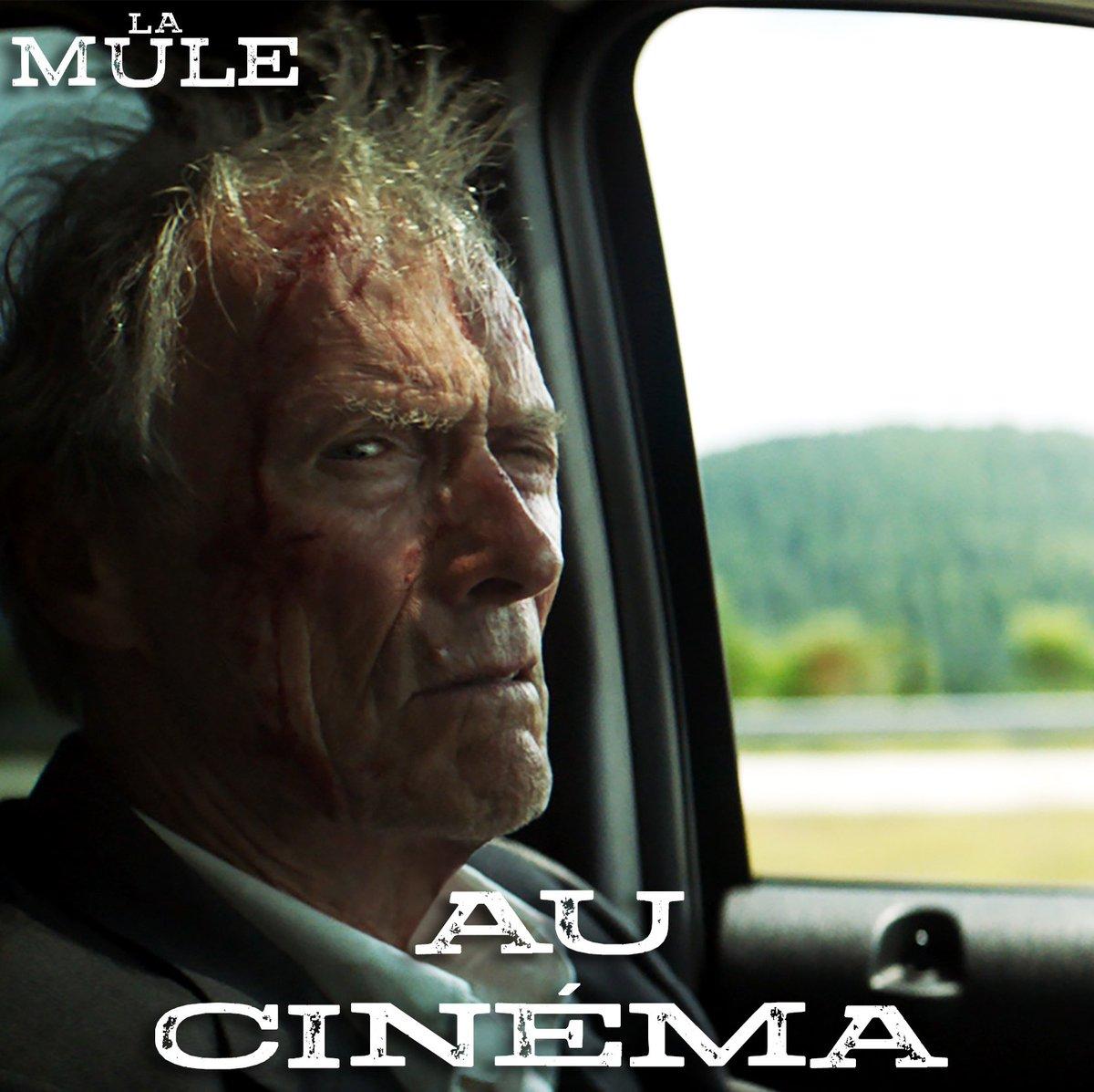 Clint Eastwood livre la vertigineuse histoire vraie du plus vieux passeur de drogue de l'histoire des Etats-Unis. #LaMule aujourd'hui au cinéma