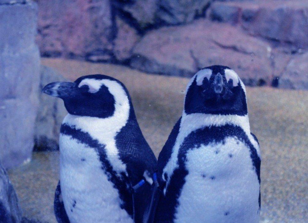 京都水族館「冬の夜のすいぞくかん」活発に動くオオサンショウウオ&すやすや眠るペンギンなど観察 - https://t.co/CasIyUtlQW