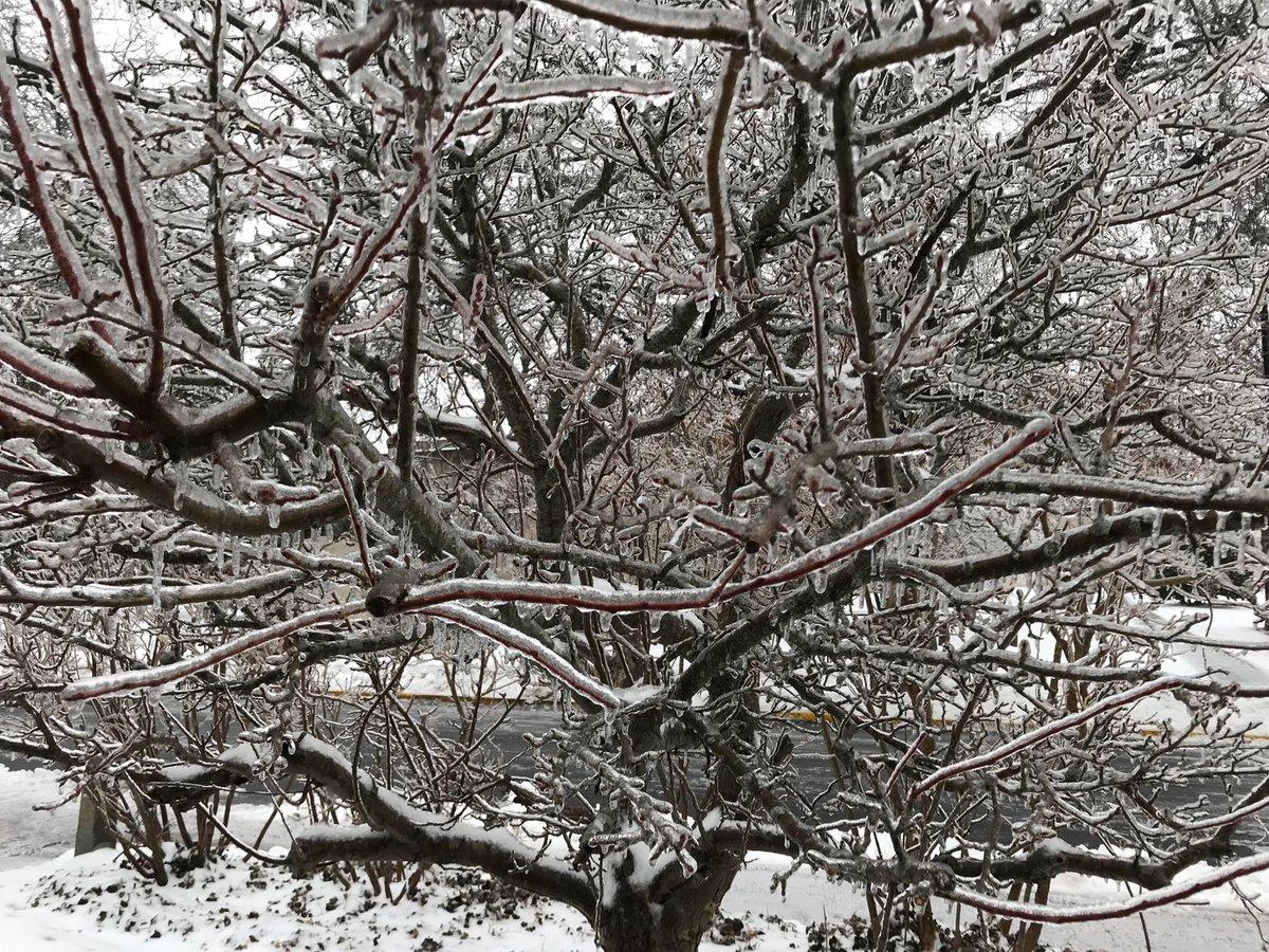 test Twitter Media - Icy morning @wesleyan_u as #supermoon descends https://t.co/1uwkl6ENeO