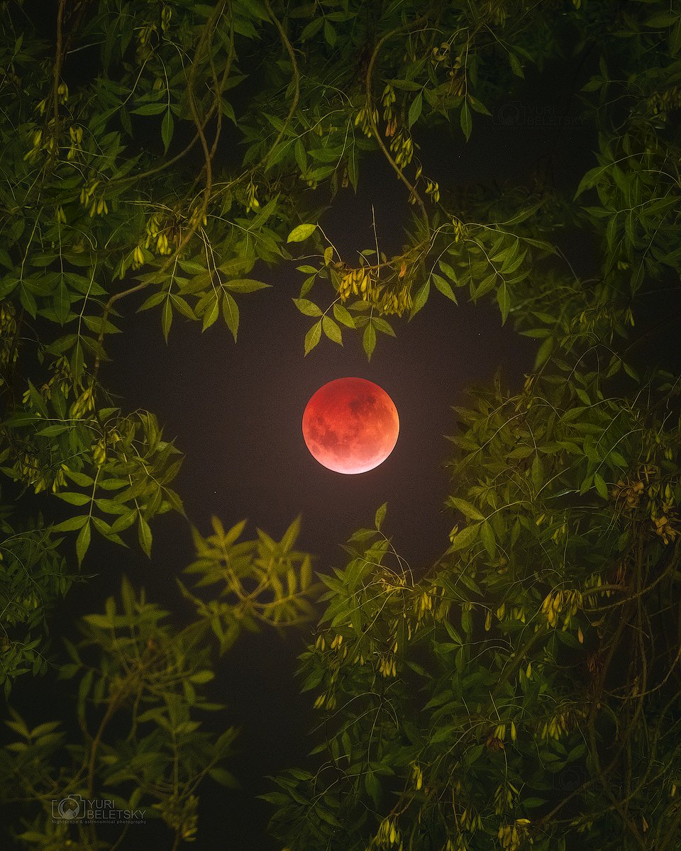 One of my favorite shots of last night's lunar eclipse from here on Earth (this one b @YBeletskyy https://t.co/GyhwLpirlB #LunarEclipse).