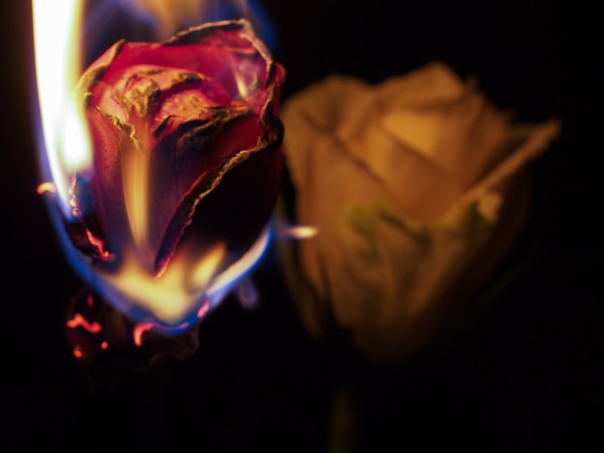 A burning passion. #photography #photooftheday #flower #fireflower