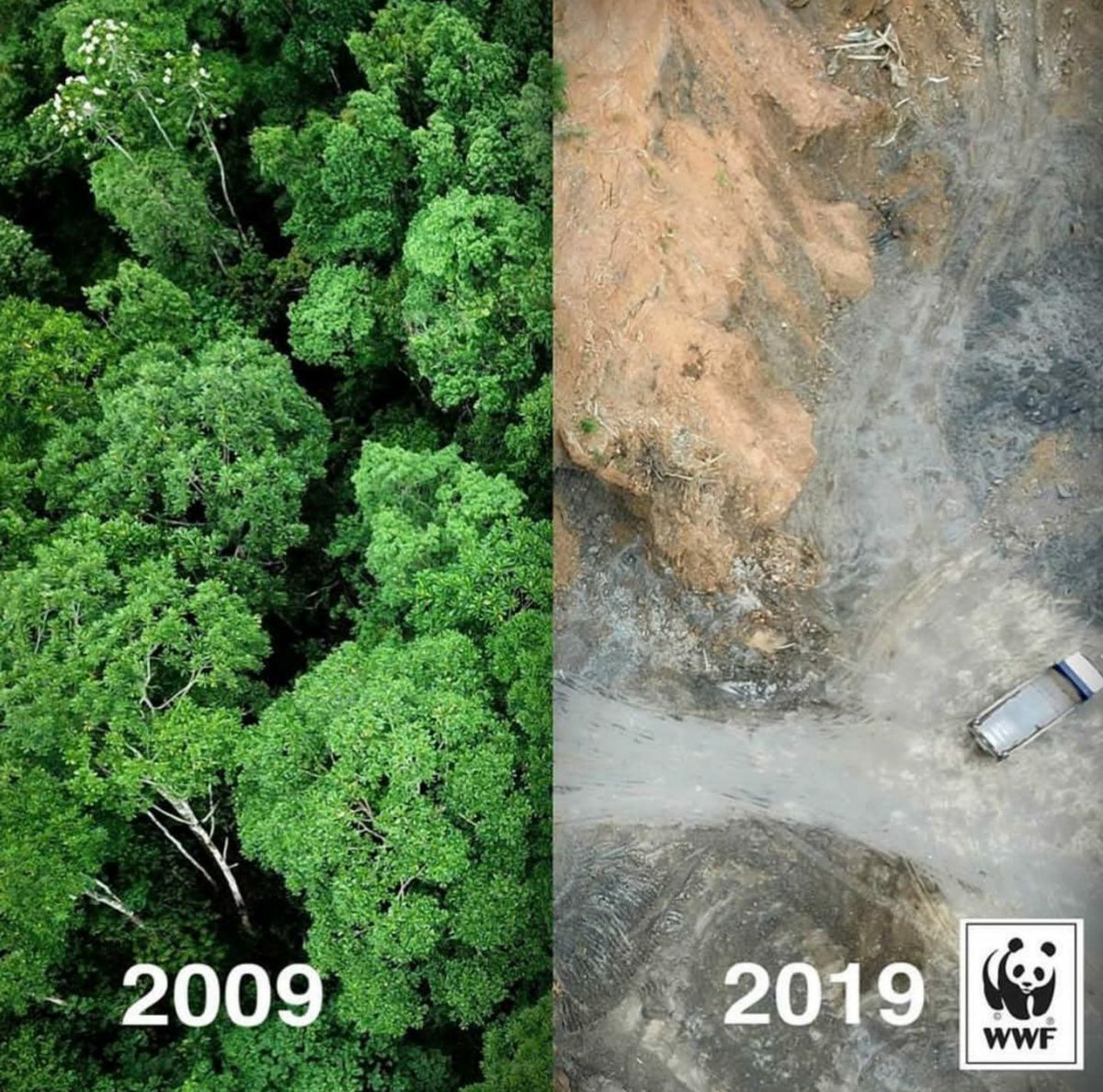 People Use 10-Year Challenge to Show How Devastatingly Different Our Planet Looks