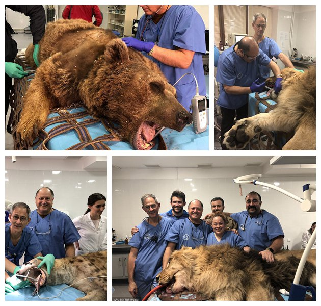 #ICYMI A dentist has been traveling the globe to work with animal rescue organizations to help treat some of the world's most dangerous mammals, handling along the way the 'monstrous' teeth of lions, tigers, bears and leopards, for almost 16 years