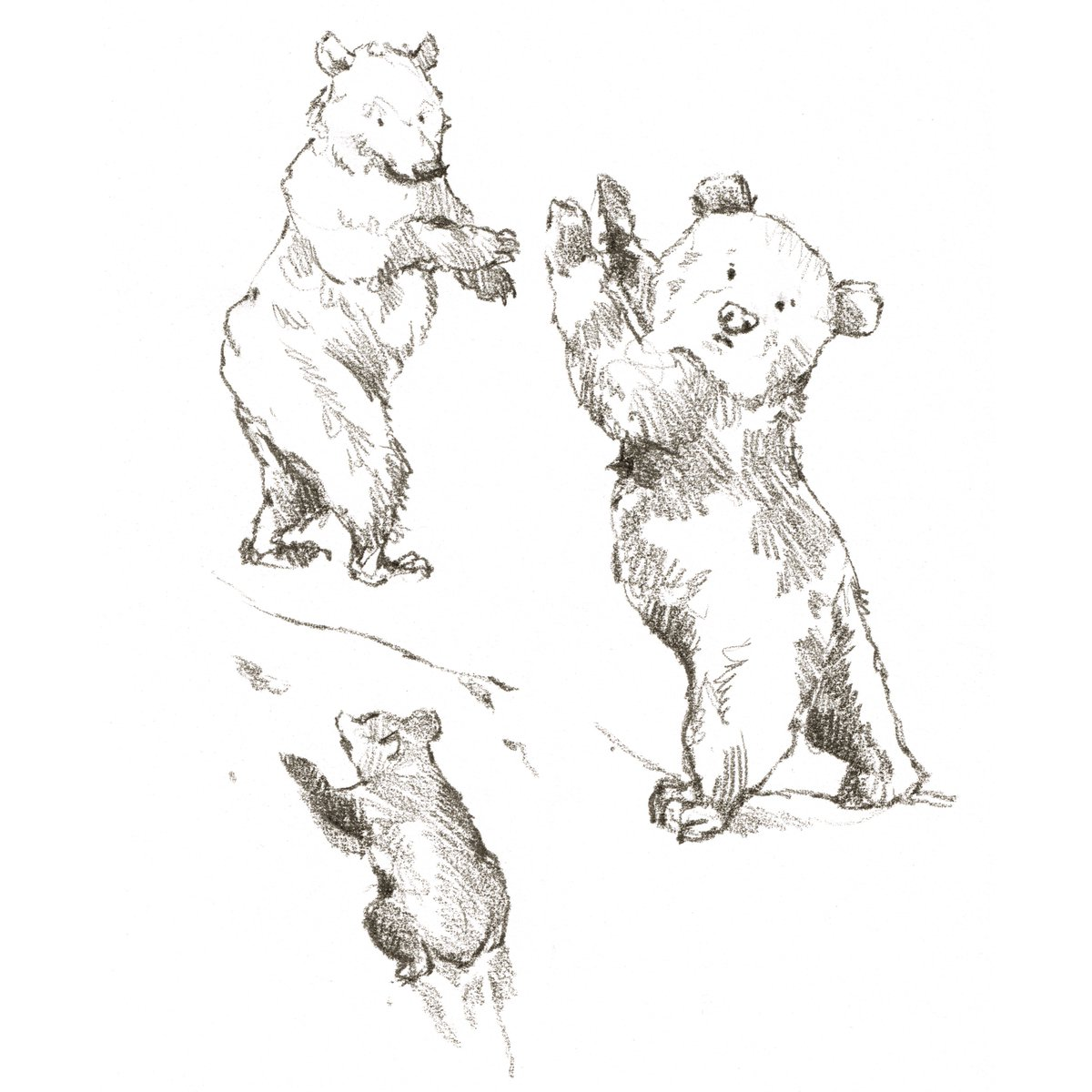 Iain Welch On Twitter Today I Am All About Drawing Bear