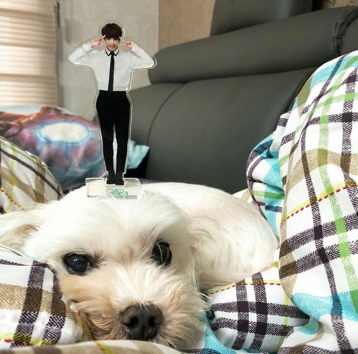"""JungkookUSA! على تويتر: """"Jungkook's dog Gureum (means Cloud) is a rescue  dog.He adopted it from an animal shelter and I think adopting rescue dogs  really is a big deal,it keeps those dogs"""