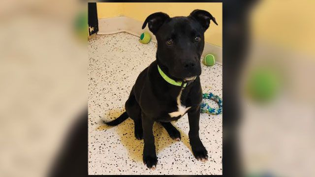'Miracle dog': Puppy wakes up after being euthanized, earns second chance at life https://t.co/FfkaiWja5f