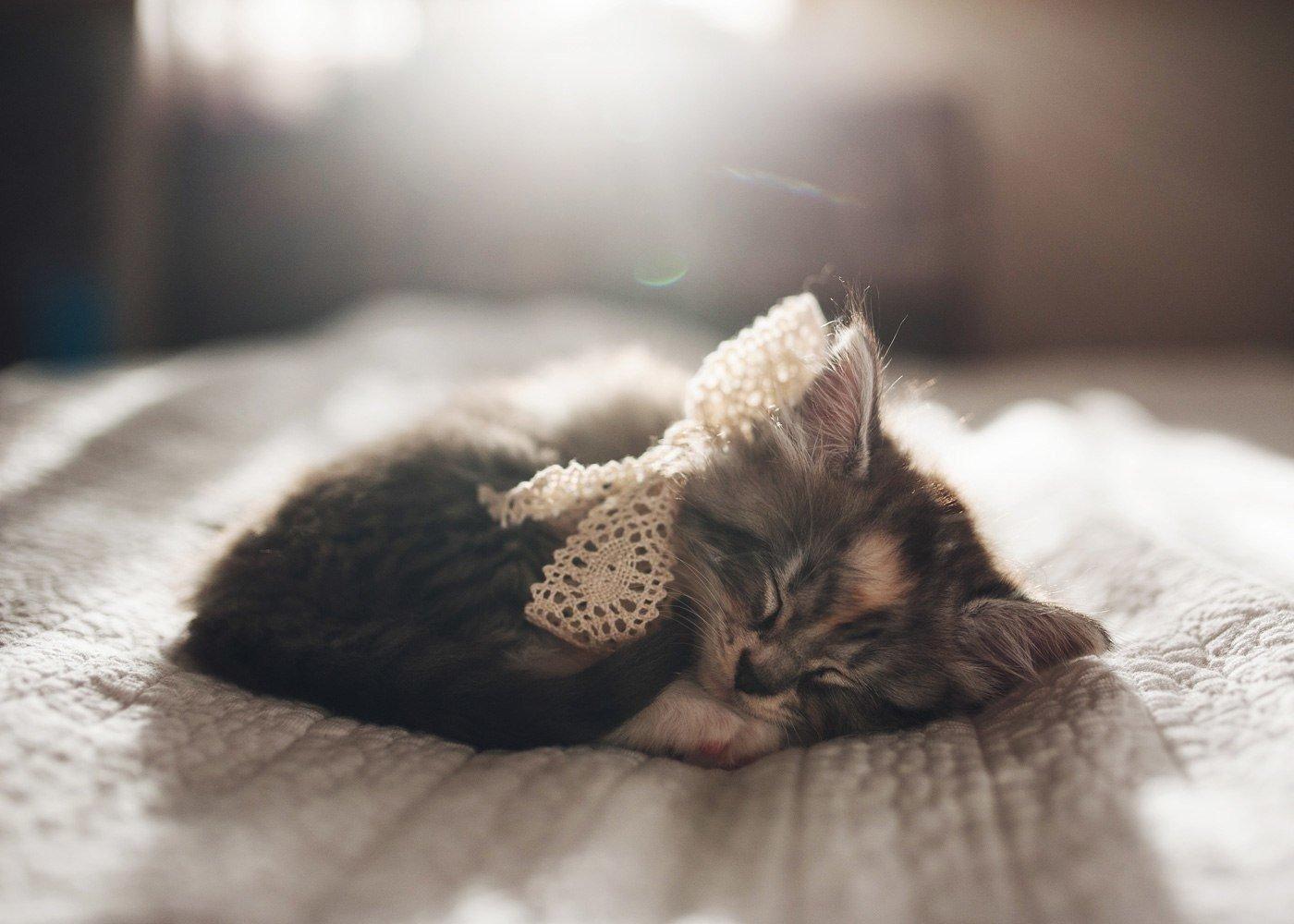 этих фото спящих котенка возьмите собой