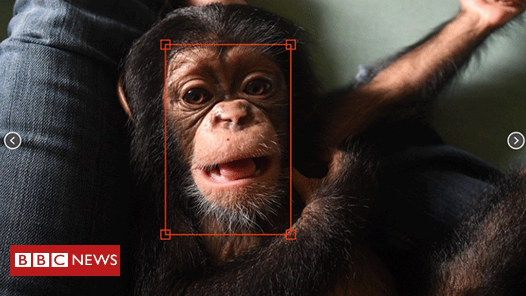 Chimpface: How a facial recognition tool is tackling the illegal chimp trade 🐵 https://t.co/OTi3omYM2N