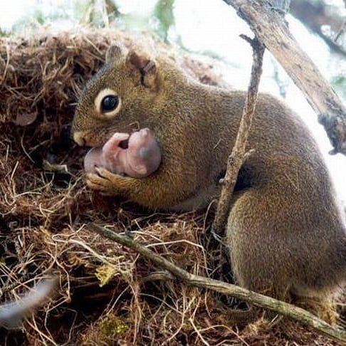 Squirrels will often adopt another squirrel's baby if its parents die or are unable to care for it. :)