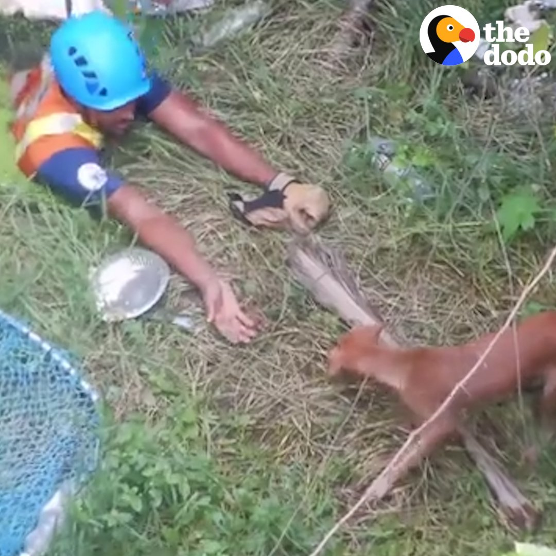 Some people would do anything to save their best friend 🐶💖 https://t.co/lu99kbIBqD