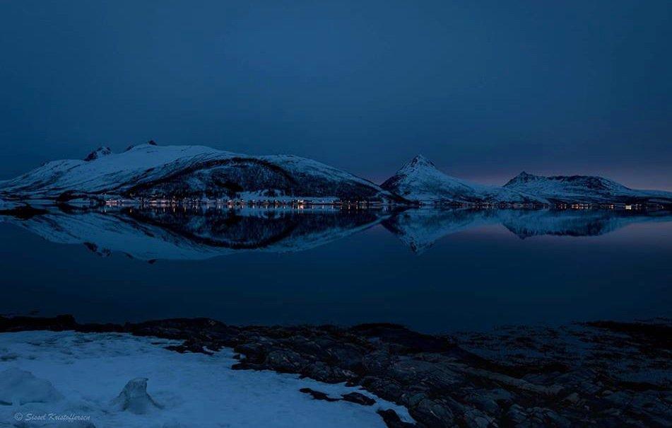 Elusive Moose's photo on #winter