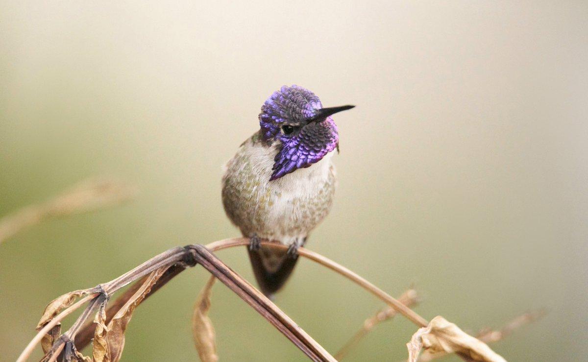 migratorybirds hashtag on Twitter