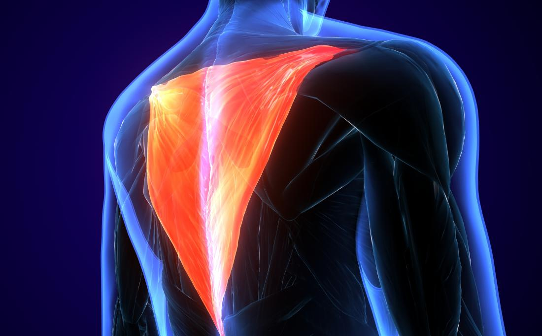 Medical News Today On Twitter What Is The Trapezius Muscle Https