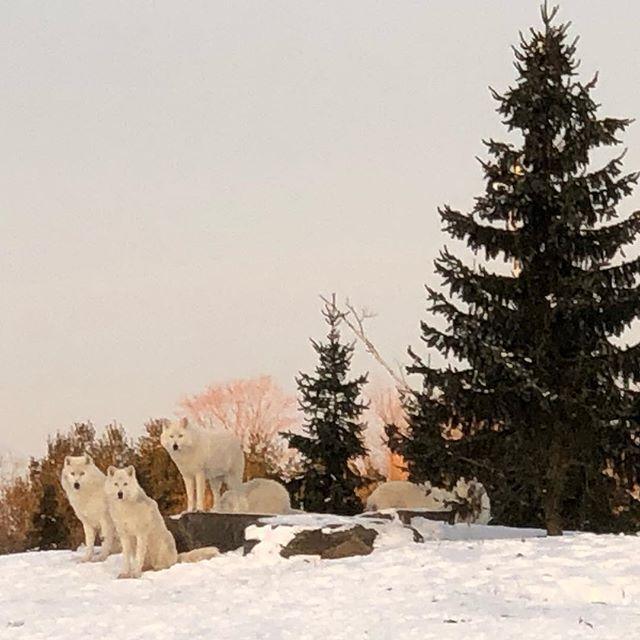 Dolf DeJong's photo on #winter