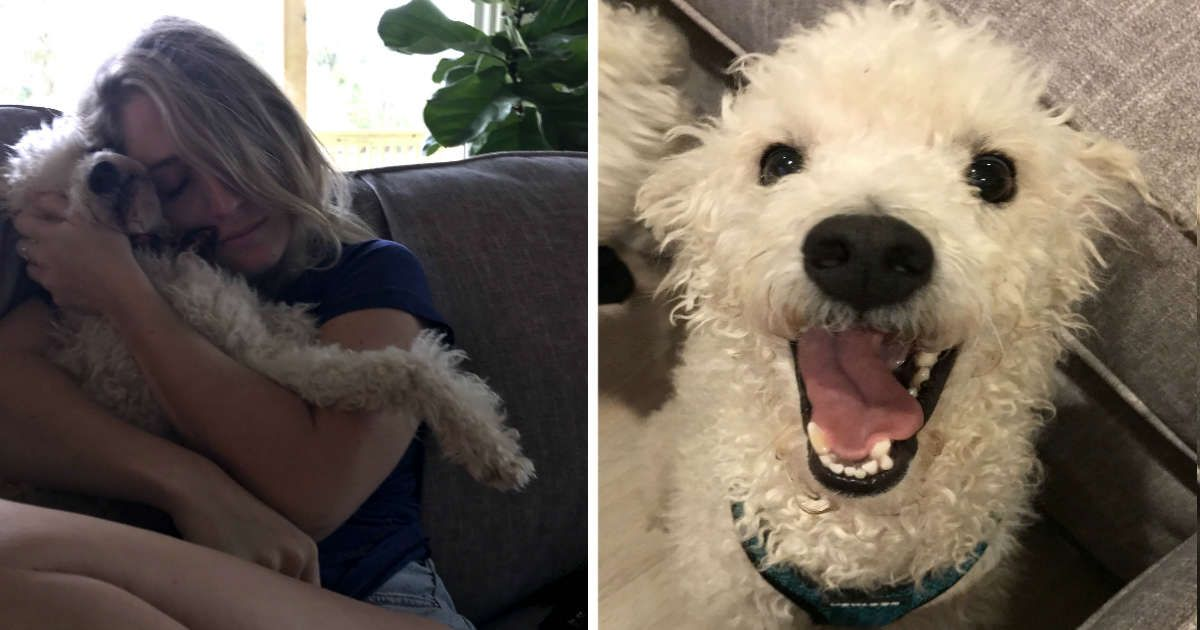 Sick stray dog had weeks to live — until he met someone who wanted him 😍https://t.co/Z7uolvrAM6