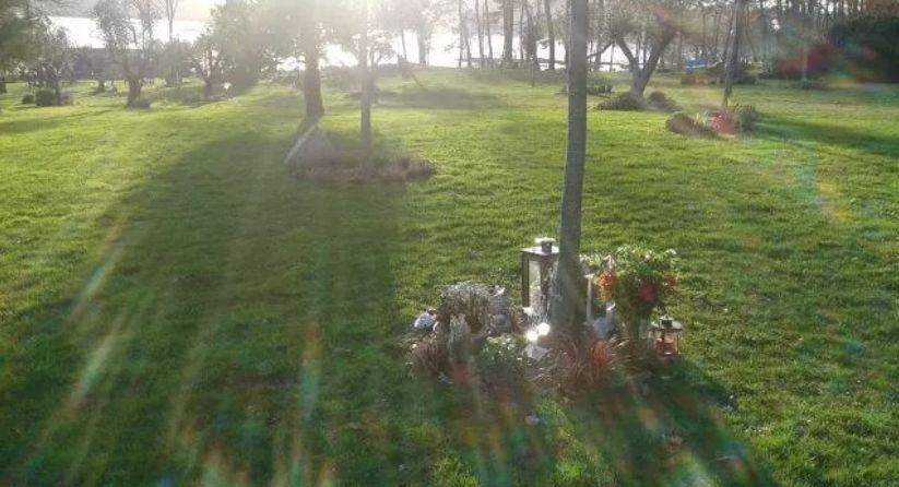 En Bretagne, un jardin de toute beauté ondoie et verdoie au soleil. Difficile de croire qu'au pied des arbres, des cendres de défunts reposent par centaines. Un 'cimetière végétal' dans lequel les promeneurs se confient sur leurs proches disparus https://t.co/VhF5jIuXwk