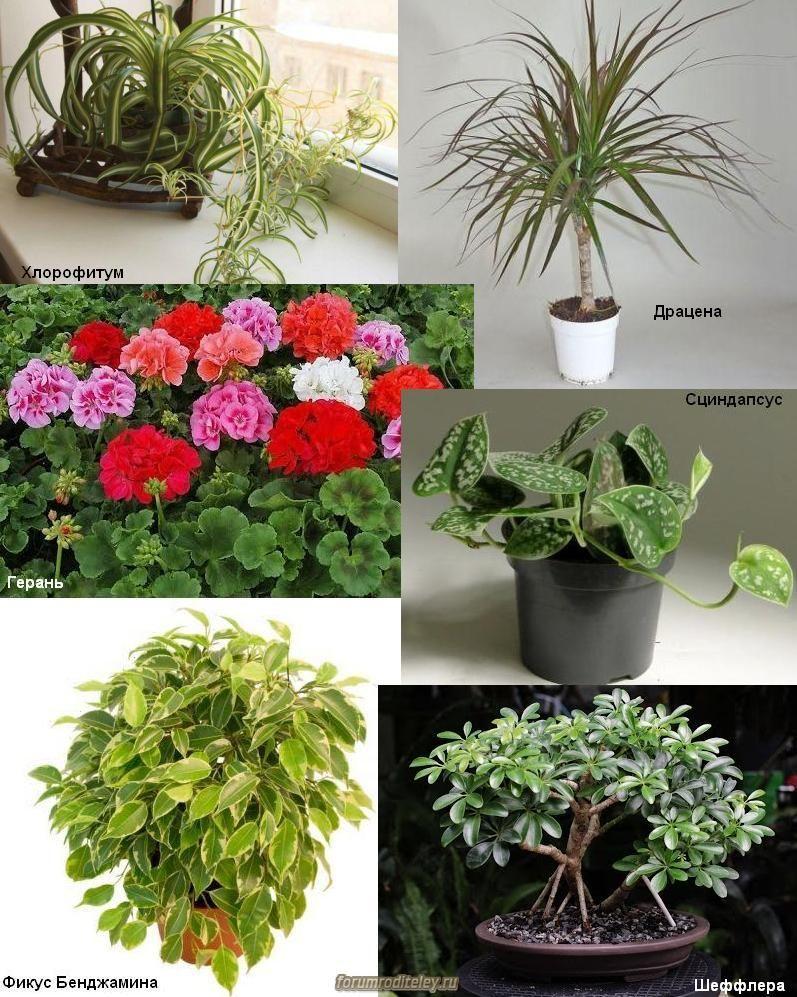 полезные цветы для квартиры с фото имя