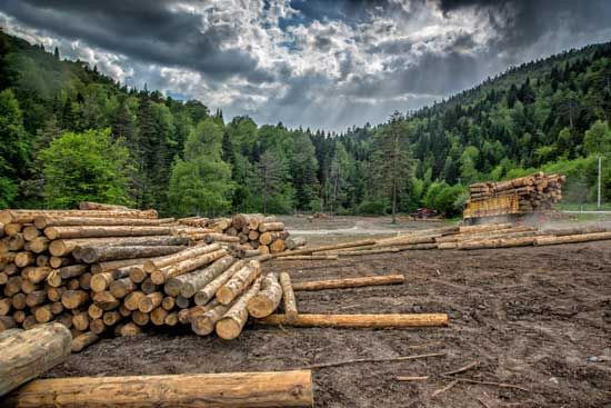 Find out how the Forest Service has been greatly influenced by the timber industry.   https://buff.ly/2W6TGJv